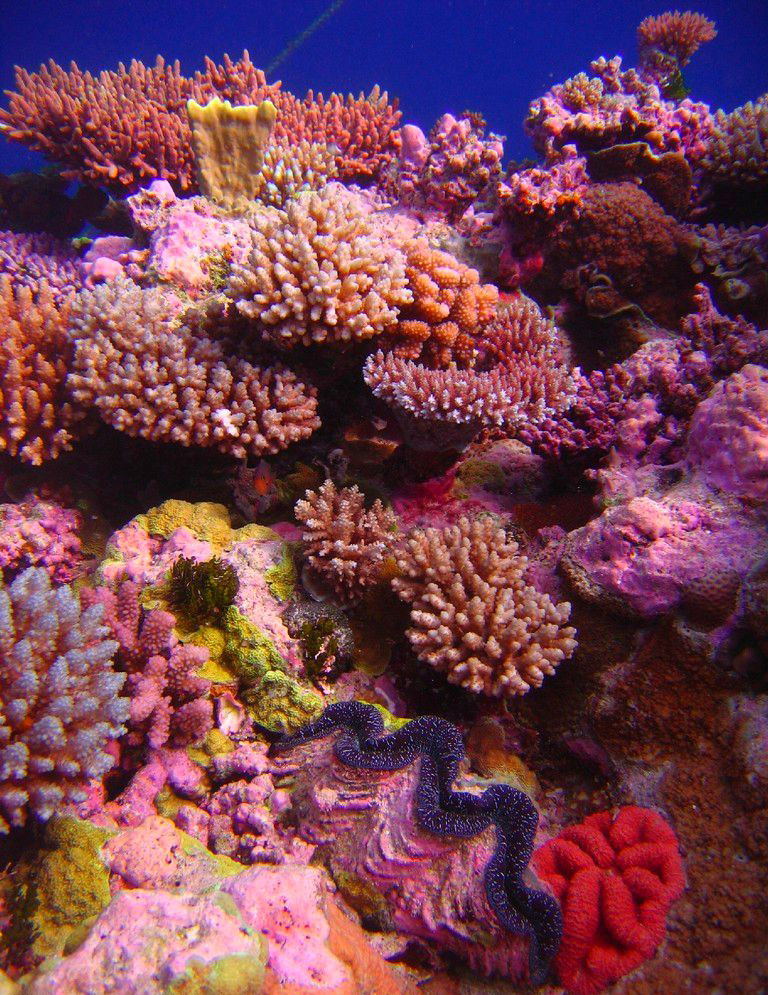 What Is A Coral