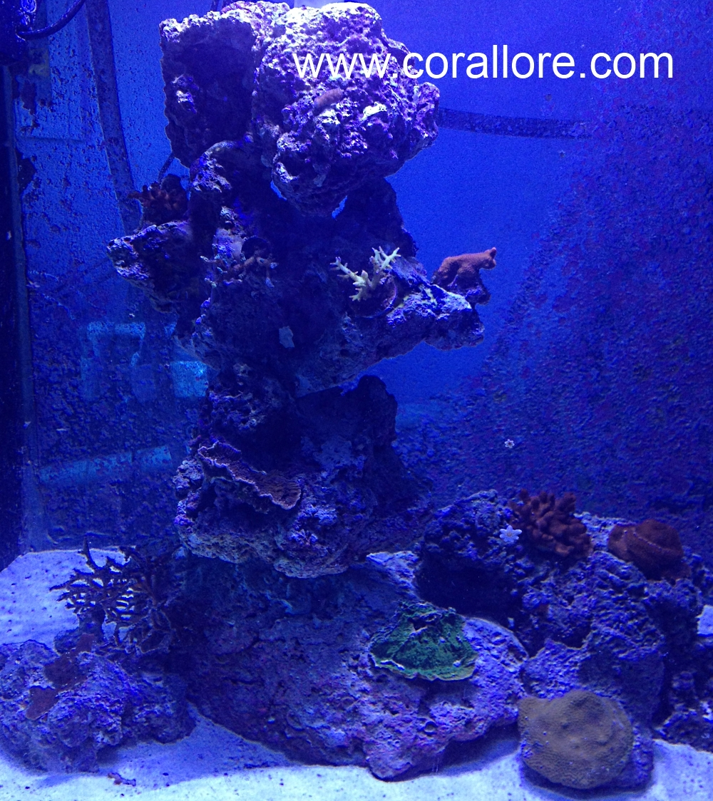 Aquascaping columns in a saltwater tank | Corallore.com