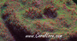 SunsetMontipora-2013-06-13-zoom